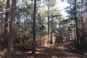 Mature TImber Investment and Hunting Land in Leake, MS (2 of 7)