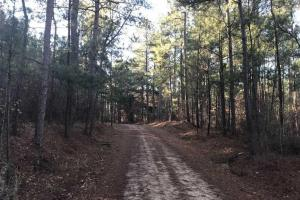 Mature TImber Investment and Hunting Land in Leake, MS (3 of 7)