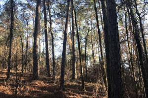 Mature TImber Investment and Hunting Land in Leake, MS (5 of 7)
