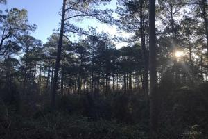 Mature TImber Investment and Hunting Land in Leake, MS (4 of 7)