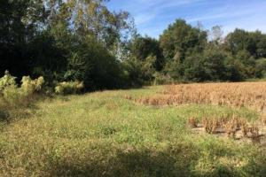 Glennwood Recreation and Hunting Tract in Crenshaw, AL (2 of 11)
