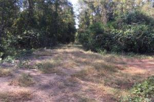 Glennwood Recreation and Hunting Tract in Crenshaw, AL (4 of 11)