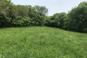 Secluded pinch point for food plot. (54 of 96)