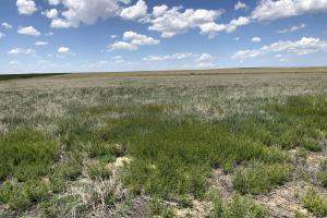 Kiowa County CRP For Sale - Kiowa County CO