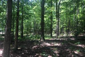 Corner-Robbins Home Sites & Timber Tract in Jefferson, AL (11 of 16)