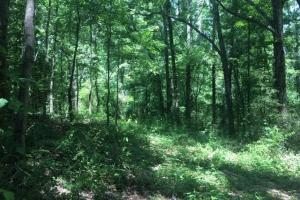Corner-Robbins Home Sites & Timber Tract in Jefferson, AL (4 of 16)