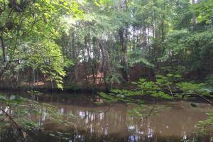 Lydia Farming, Hunting and Recreational Tract with Homesite in Darlington, SC (12 of 42)