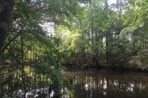 Lydia Farming, Hunting and Recreational Tract with Homesite in Darlington, SC (33 of 42)