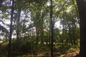 Lydia Farming, Hunting and Recreational Tract with Homesite in Darlington, SC (29 of 42)