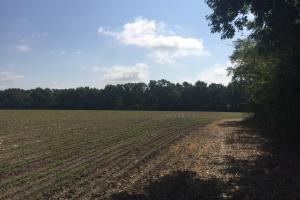 Lydia Farming, Hunting and Recreational Tract with Homesite in Darlington, SC (37 of 42)