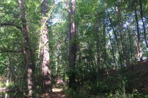 Lydia Farming, Hunting and Recreational Tract with Homesite in Darlington, SC (19 of 42)