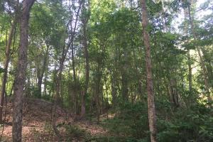 Lydia Farming, Hunting and Recreational Tract with Homesite in Darlington, SC (30 of 42)