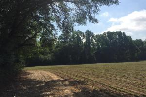 Lydia Farming, Hunting and Recreational Tract with Homesite in Darlington, SC (22 of 42)