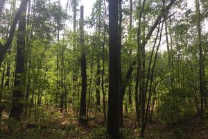 Lydia Farming, Hunting and Recreational Tract with Homesite in Darlington, SC (25 of 42)