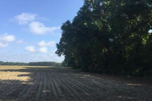 Lydia Farming, Hunting and Recreational Tract with Homesite in Darlington, SC (5 of 42)
