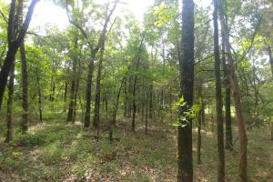 10.16+/- Acres Residential Land and Waterfront Property in Johnson, AR (14 of 20)