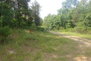 10.16+/- Acres Residential Land and Waterfront Property in Johnson, AR (19 of 20)