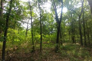 10.16+/- Acres Residential Land and Waterfront Property in Johnson, AR (16 of 20)