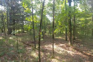 10.16+/- Acres Residential Land and Waterfront Property in Johnson, AR (17 of 20)