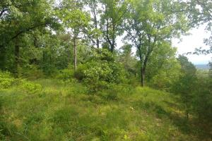 10.16+/- Acres Residential Land and Waterfront Property in Johnson, AR (12 of 20)