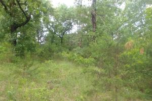10.16+/- Acres Residential Land and Waterfront Property in Johnson, AR (11 of 20)