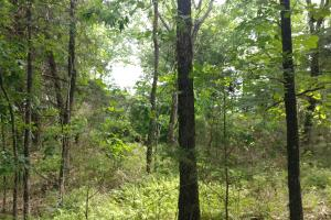 10.16+/- Acres Residential Land and Waterfront Property in Johnson, AR (18 of 20)