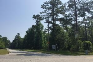 White Oak Investment Tract A in Clarendon, SC (7 of 15)