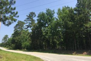 White Oak Investment Tract A in Clarendon, SC (12 of 15)