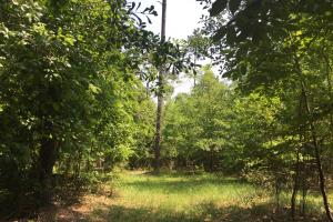 White Oak Investment Tract A in Clarendon, SC (2 of 15)