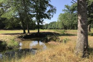 North to South View of 17 Acre Food Plot on +/-80 Acre Kemper County, MS Hunting & Recreational Property With Custom Cabin and Pond (1 of 25)