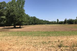 17 Acre Food Plot on +/-80 Acre Kemper County, MS Hunting & Recreational Property With Custom Cabin and Pond (18 of 25)