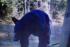 Trail Camera Image Taken Near on +/-80 Acre Kemper County, MS Hunting & Recreational Property With Custom Cabin and Pond (20 of 25)