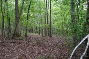 17+/- AC Potential Farm with Pasture in Haralson, GA (12 of 28)