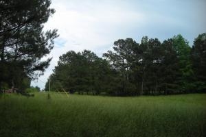 17+/- AC Potential Farm with Pasture in Haralson, GA (6 of 28)