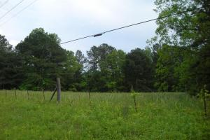 17+/- AC Potential Farm with Pasture in Haralson, GA (16 of 28)