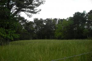 17+/- AC Potential Farm with Pasture in Haralson, GA (21 of 28)