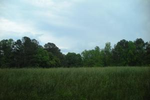 17+/- AC Potential Farm with Pasture in Haralson, GA (17 of 28)