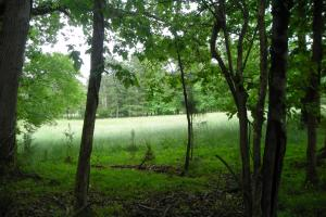 17+/- AC Potential Farm with Pasture in Haralson, GA (3 of 28)