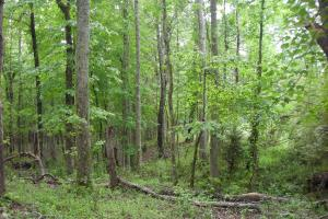 17+/- AC Potential Farm with Pasture in Haralson, GA (9 of 28)