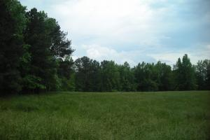 17+/- AC Potential Farm with Pasture in Haralson, GA (10 of 28)