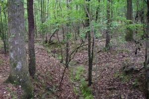 17+/- AC Potential Farm with Pasture in Haralson, GA (22 of 28)