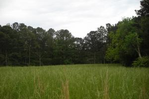 17+/- AC Potential Farm with Pasture in Haralson, GA (20 of 28)