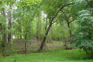 17+/- AC Potential Farm with Pasture in Haralson, GA (8 of 28)