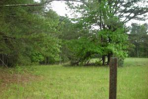 17+/- AC Potential Farm with Pasture in Haralson, GA (23 of 28)
