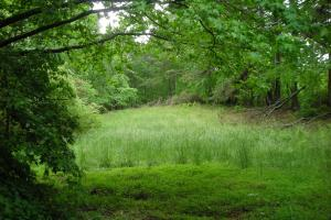17+/- AC Potential Farm with Pasture in Haralson, GA (13 of 28)