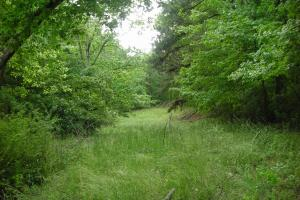 17+/- AC Potential Farm with Pasture in Haralson, GA (7 of 28)