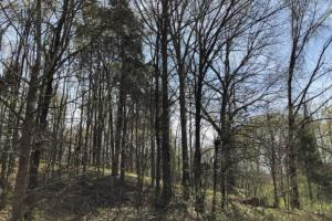 Tate County Farm and Homesite  in Tate, MS (7 of 10)