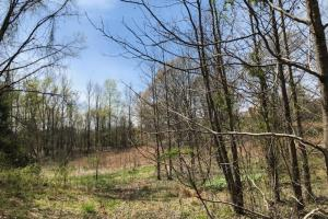 Tate County Farm and Homesite  in Tate, MS (8 of 10)