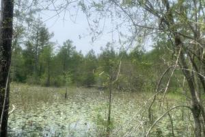 Little Macedonia Duck Holes Hunting Land in Brunswick, NC (8 of 21)