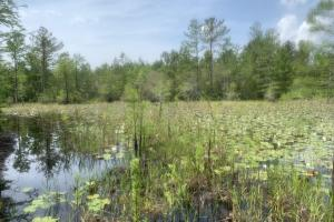 Little Macedonia Duck Holes Hunting Land in Brunswick, NC (4 of 21)